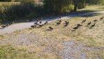 Feeding time for the ducks.jpg