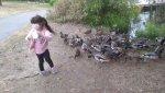 Liliana and the ducks 2.jpg