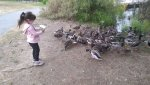 Liliana and the ducks.jpg