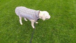 Beau rain jacket 1.jpg