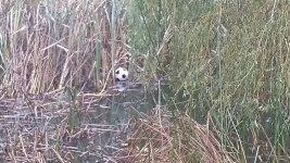 Soccer ball in the pond.jpg