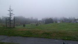 Drizzly Foggy Morning .jpg
