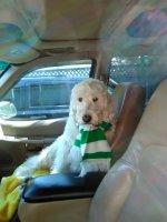 Beau Celtic scarf 3.jpg