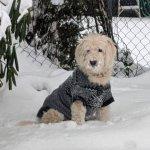 Beau the SnowBear .jpg