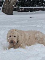 Beau the snow bear 1.jpg
