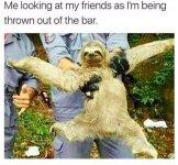 Sloth 1.jpg