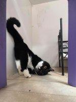 funny cat 1.jpg
