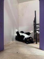 funny cat 2.jpg