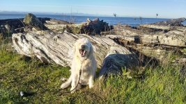 Beau at Centennial Beach.jpg