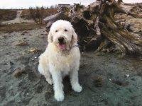 Beau Bear Beach Pup .jpg
