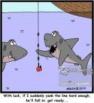 animals-shark-shark_attack-shark_fishing-shark_fishers-fishes-cgan4490_low.jpg