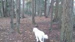 Beau in the forest.jpg
