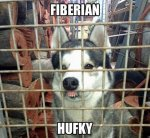 Fiberian Husky.jpg