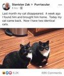 Te cat came back.jpg