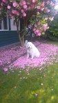 Beau pretty in pink .jpg