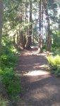woods walk 4.jpg